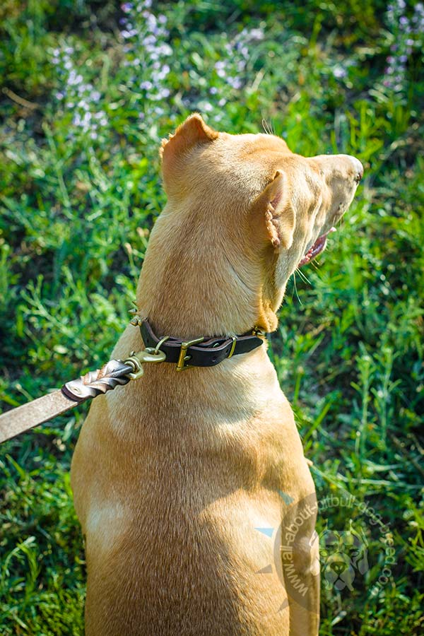 Reliable leather collar for Pitbull