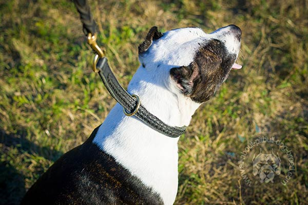 Pitbull leather collar with brass hardware