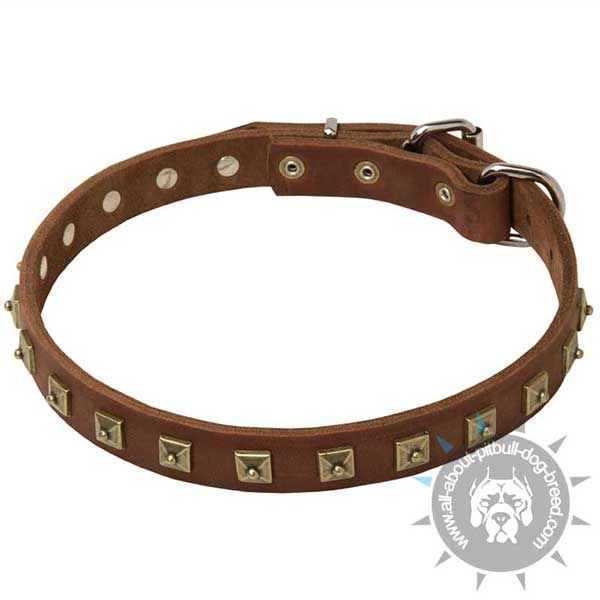 Top quality leather dog collar with handset studs