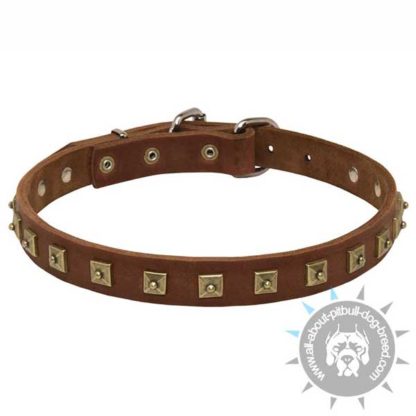 Beautiful Pitbull collar made of leather