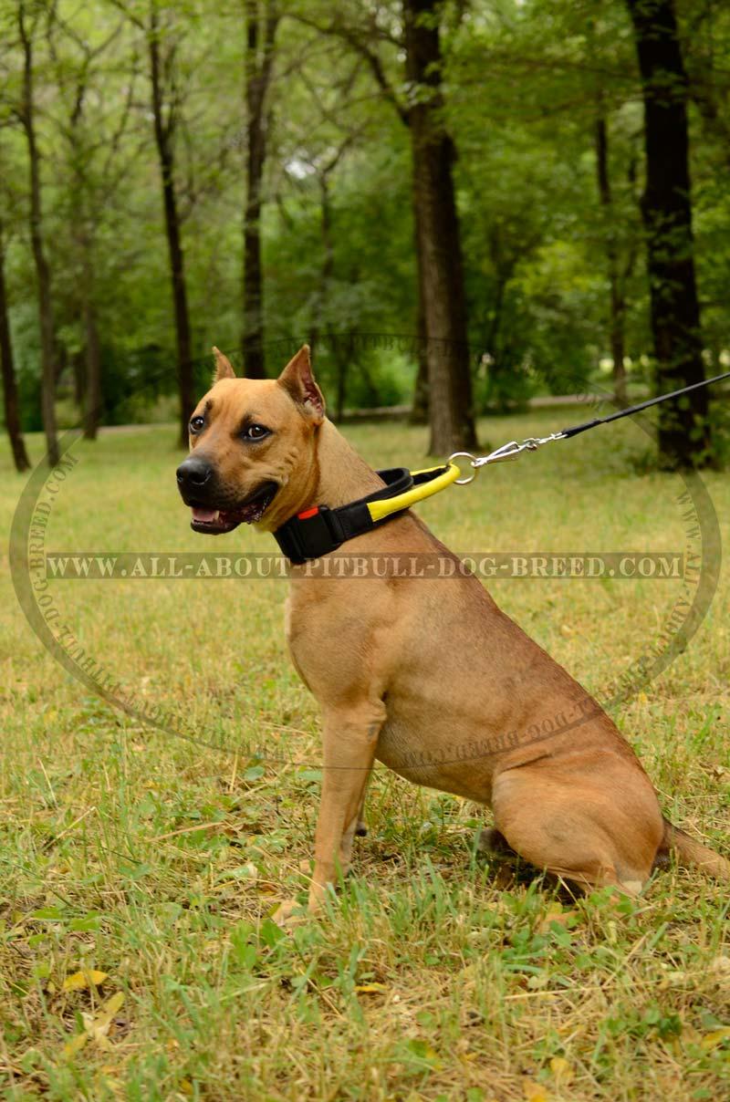 Strongest Nylon Dog Collar Universal Pitbull Training