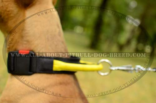 Finest Dog Nylon Collar