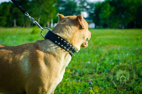 Functional nylon collar for Pitbull