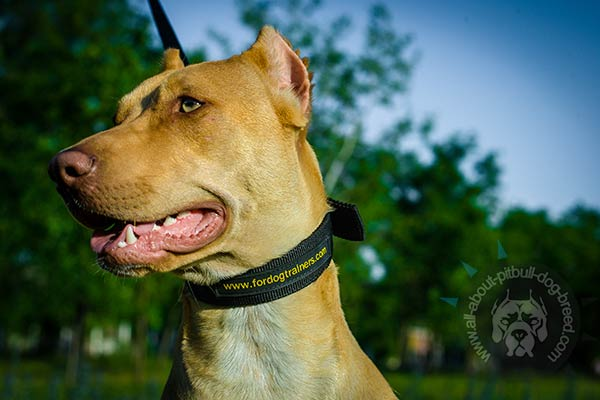 Strong Pitbull collar for dog control