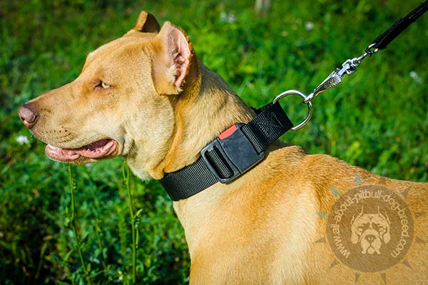 Easy to use nylon Pitbull collar