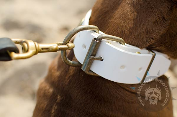 Pitbull white leather collar with brass buckle