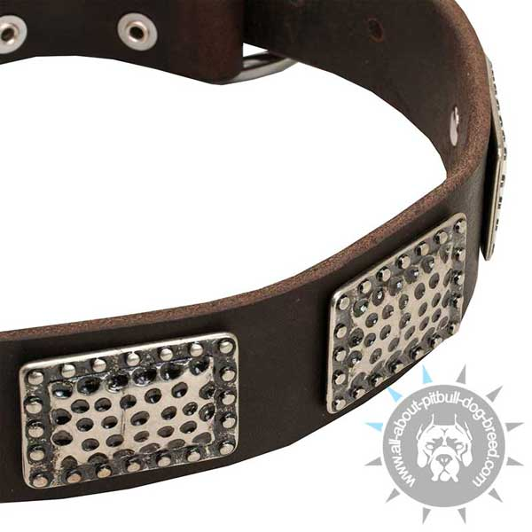 Leather Dog Collar with Nickel Decorations