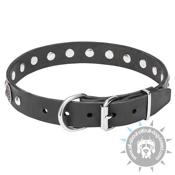 Luxury Leather Dog Collar with Chrome Plated Hardware