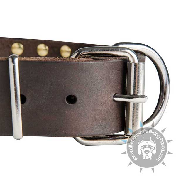 Traditional Buckle on  Pitbull Leather Collar