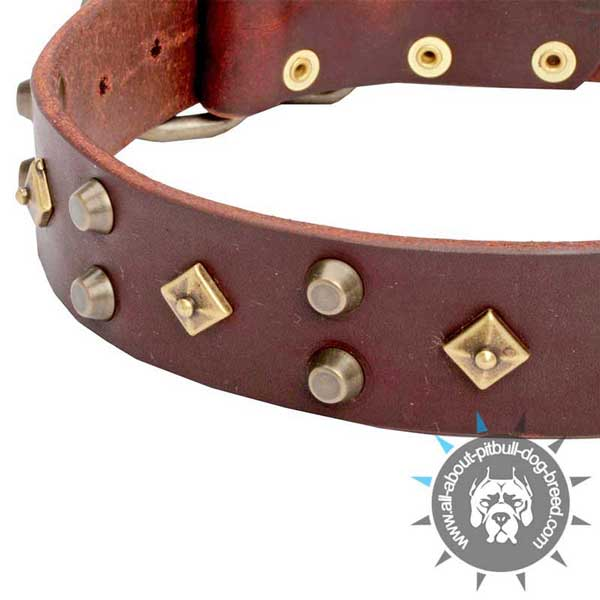 Selected Genuine Brown Leather Dog Collar for Comfortable Walks
