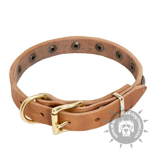 comfortable leather dog collar with adjustable buckle