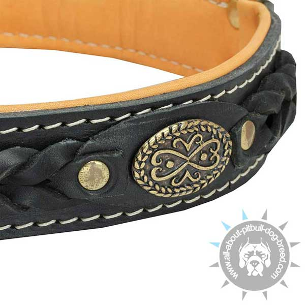 Simply beautiful Pitbull collar made of leather