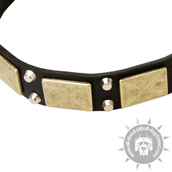 Leather dog collar for regular wear