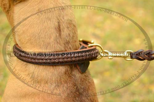 Braided Leather Dog Collar with Strong Fittings