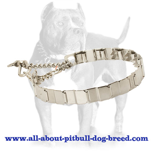 stainless steel Dog Collar