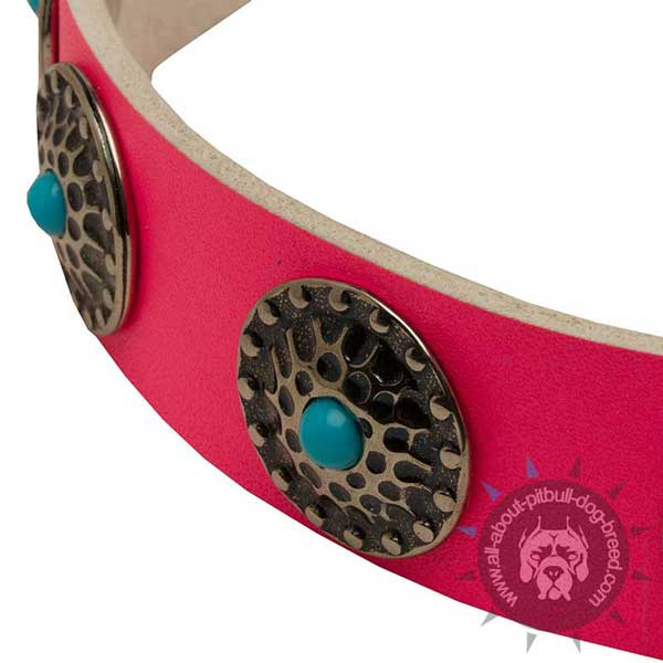 Reliable leather dog collar with rustproof hardware