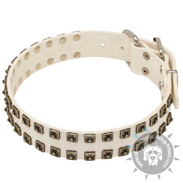 White leather Pit Bull collar accented with 2 row of studs