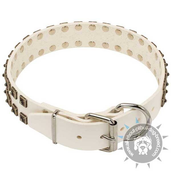 White leather Pitbull collar with studs