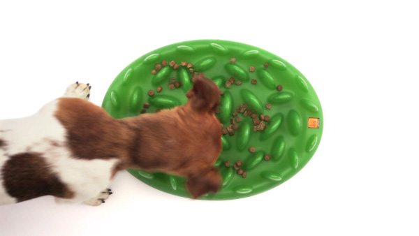 Dog Feeder with Dry Food Distributed Throughout Its Blades