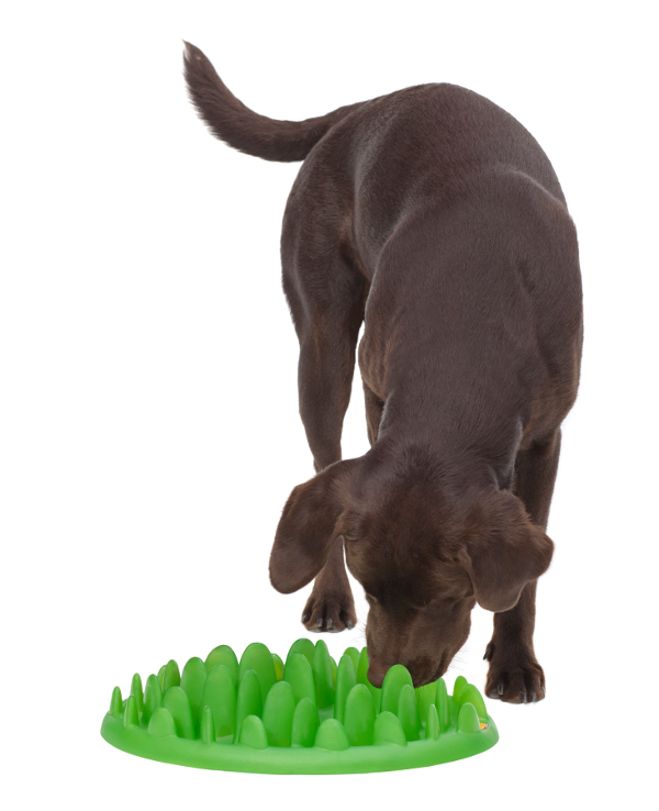 Dependable American Pitbull Terrier Feeder Green Safe for Health