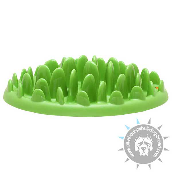 Plastic Safe Pitbull Feeder Useful for Healthy Dog Nutrition
