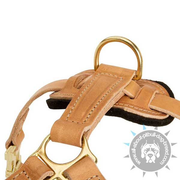 Padded Back Plate and Wide D-ring on Leather Pitbull Harness