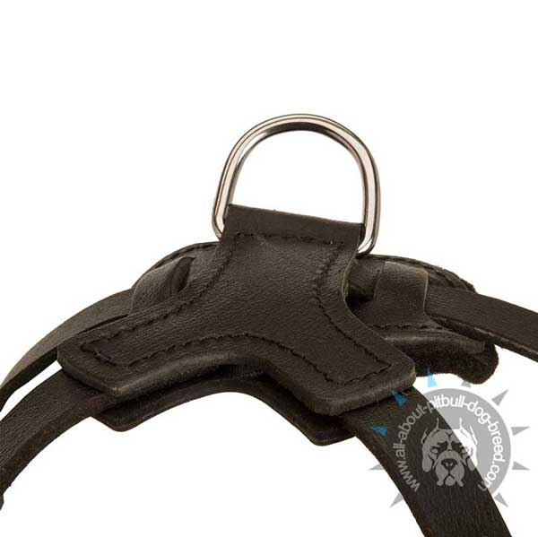 Reliable D-Ring on Training Leather Pitbull Harness