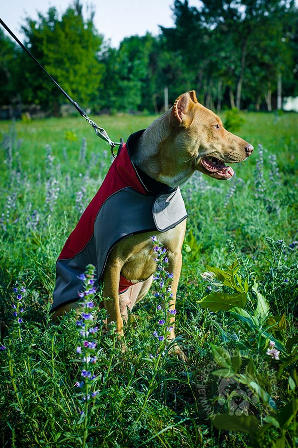 Great for any weather nylon Pitbull coat
