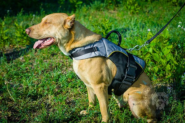 Lightweight nylon Pitbull harness