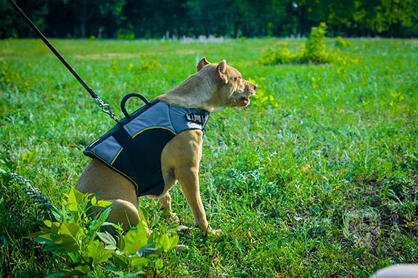 Appropriate for any weather nylon Pitbull harness