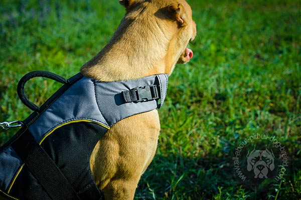 Nylon Pitbull harness great for vet visits