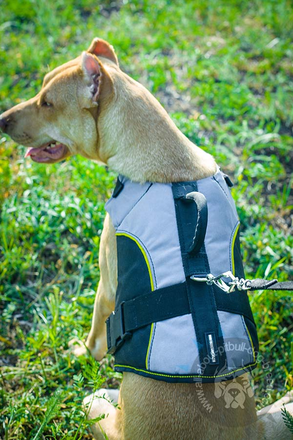 Wear-resistant nylon Pitbull harness