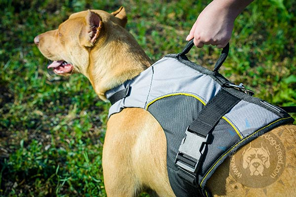 Easy to handle nylon Pitbull harness