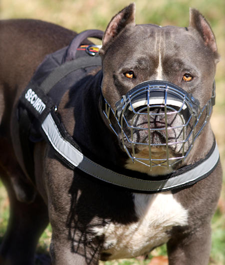 pitbull nylon harness for daily walking