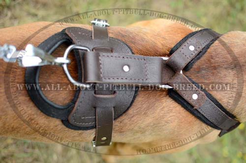 Everyday Pitbull Leather Dog Harness