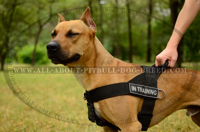 Search and Rescue Nylon Dog Harness with Heavy-Duty Convenient ...