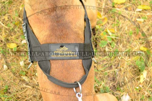 Everyday Nylon Dog Harness