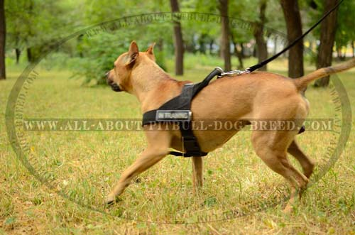 Effective Training Nylon Dog Hareness