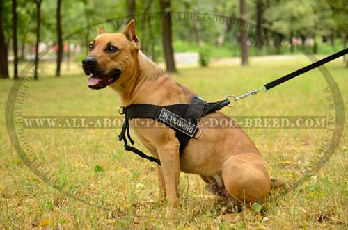 Best Pulling Nylon Dog Harness