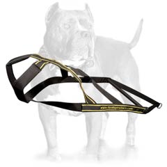 Extra ordinary designer nylon dog harness