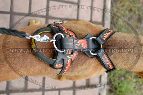 Well-Made Leather Dog Harness