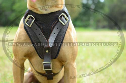 Protective  Leather Dog Harness
