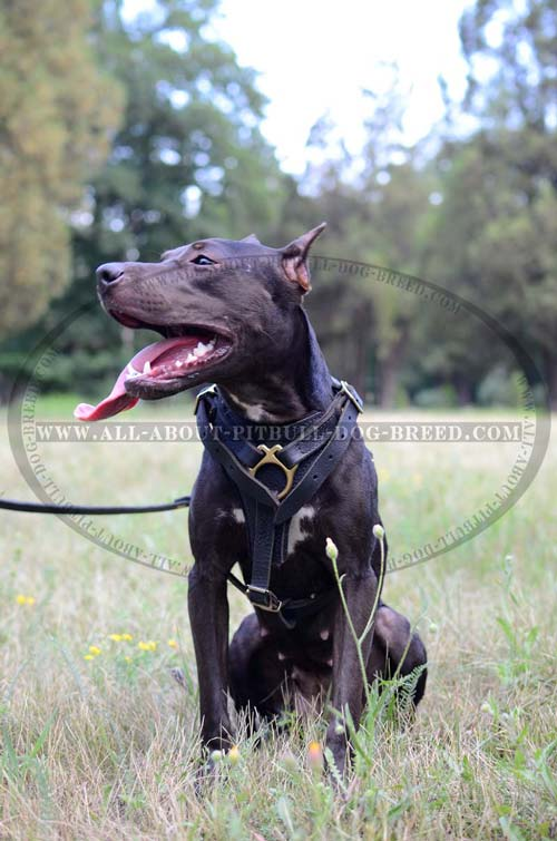 Easy Handling Leather Dog Harness
