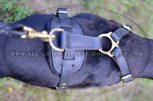 Tracking Leather Dog Harness