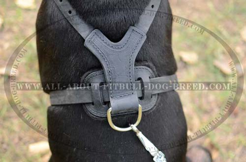 Professional Dog Harness For Better Control Over Pitbull