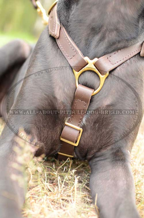 Super Strong  Leather Dog Harness
