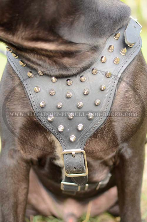 Stunning Design Leather Dog Harness