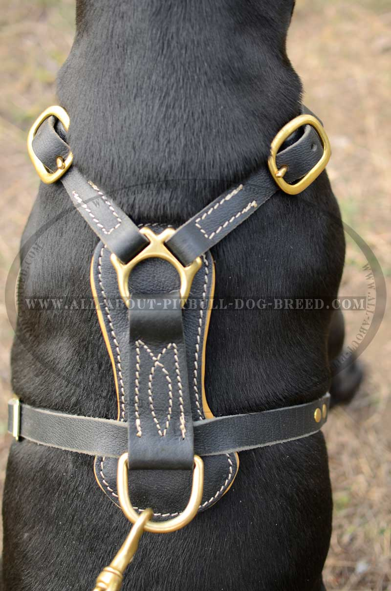 Studded Leather Dog Harness-Fancy Hand Crafted Dog Equipt [H11 ...