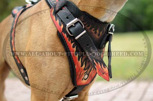 Extra Ordinary Leather Dog Harness