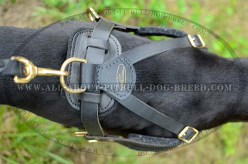 Best Fitting  Leather Dog Harness